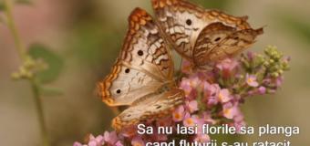 Să nu laşi florile să plângă