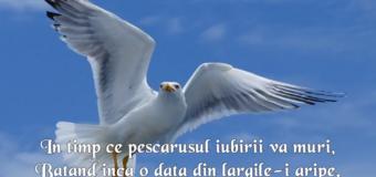 Mirabela Dauer & Marian Nistor – Frunza mea albastra